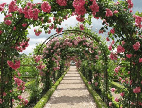 꽃의 여왕이 찾아오는 오월, 로맨틱한 장미 축제 4