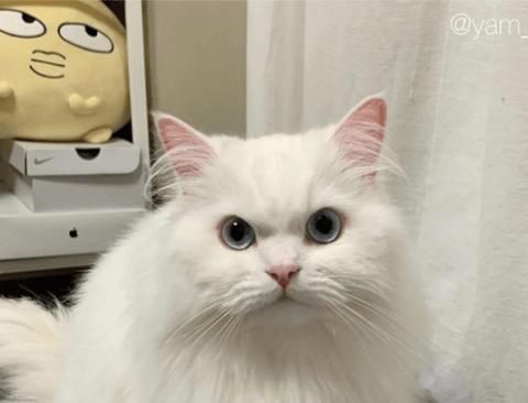 고양이 분노 3단변화