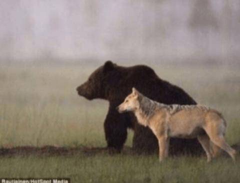곰과 늑대의 한편의 동화같은 실화