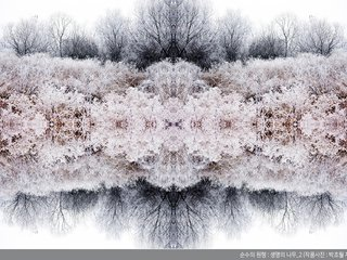 박초월 '생명의 나무'展