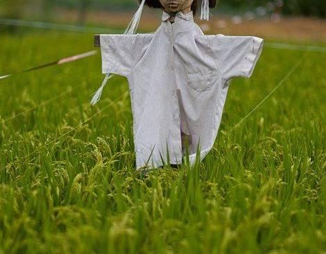 심쿵하는 성진국 허수아비 클라스 (놀람주의)