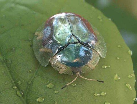 한마리에 30만원짜리 희귀한 곤충 .JPG