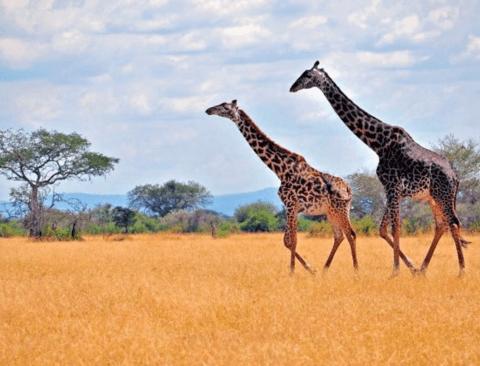 죽기전에는 가보고싶은 아프리카의 세계문화유산