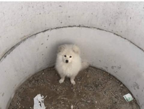 만원과 함께 버려진 강아지.jpg