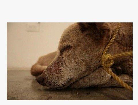 굶어 죽어가는 개를 전시한 예술가
