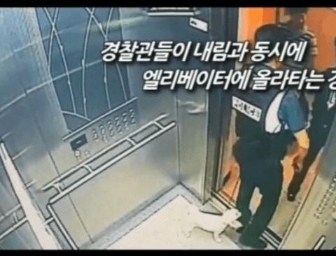 (스압)엘리베이터에서 반려견을 안고 타야하는 이유