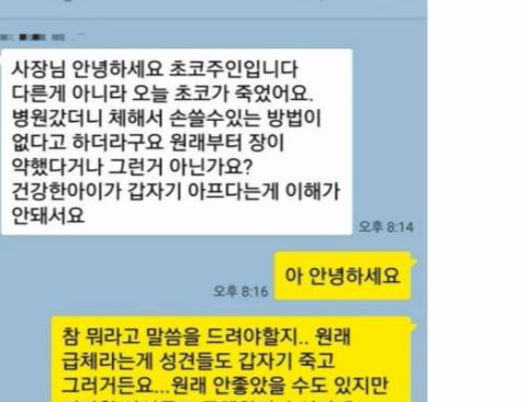 최근 대전 펫샾 레전드 사건(카톡내용)