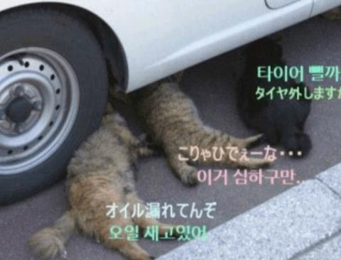 자동차 정비소의 일상(feat.냥이)