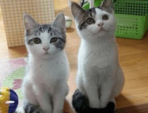 고양이 발도리 자세.jpg