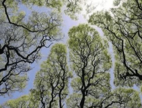 사회적 거리두기 실천하는 나무들