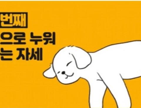 강아지 수면 자세 이유