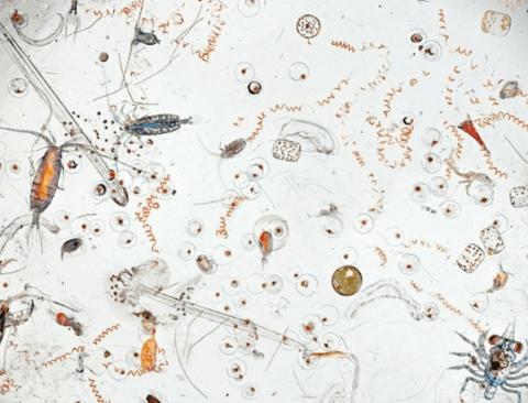 바닷물 한 방울 속에 들어있는 미생물