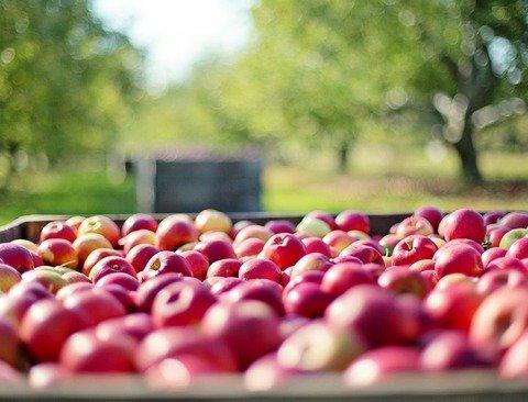 사과가 우리에게 가져다주는 놀라운 효과 5가지