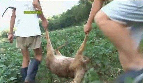 고라니 시체 고기를 먹게 된 자연인.jpg