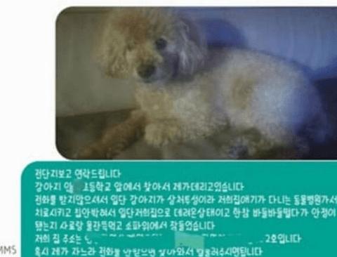 [스압] 잃어버린 강아지 찾아서 견주에게 연락한 결과