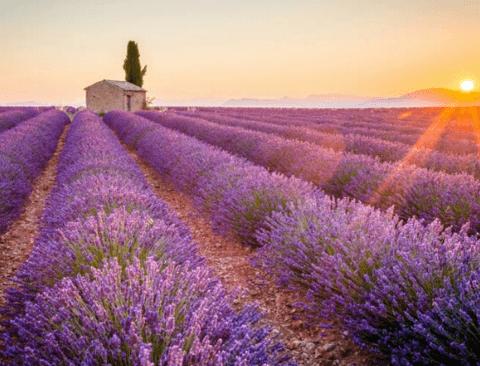 [스압] 파리보다 더 가보고 싶은 프랑스 남부 여행지