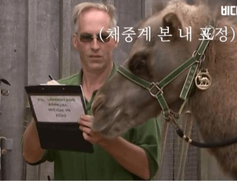 [스압] 동물 친구들 몸무게 재는 날