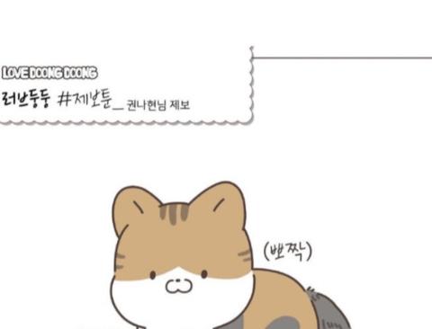 사이버 강의중 난입한 고양이.jpg