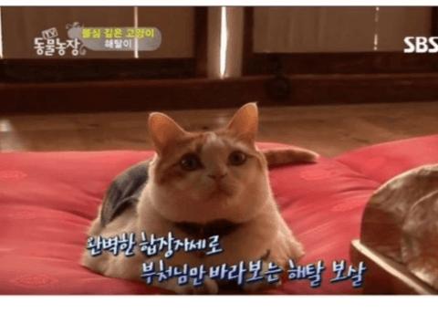 불심이 깊은 고양이.jpg