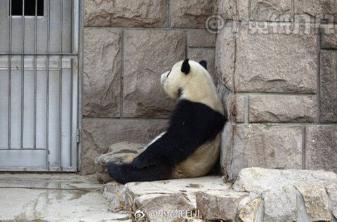 팬더는 슬플 때 혼자 앉아있는다