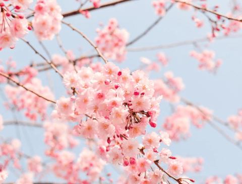벚꽃 기다리지 말고 찾아가는 여행지 '후쿠오카', 미리 알아두면 좋은 5가지 꿀팁