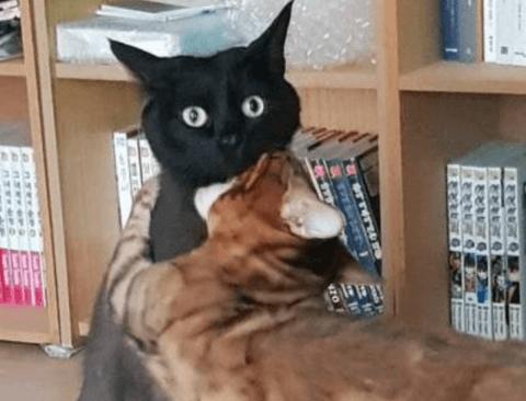 집사가 코막고 입으로 숨을 쉬자 냥냥이의 반응