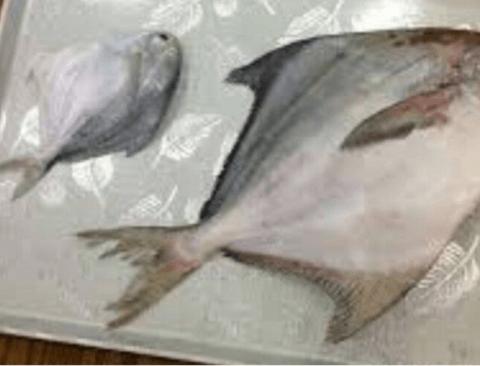 접하기 어렵지만 상당히 맛있는 생선.jpg