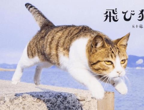 점프하는 고양이 사진을 모은 사진집