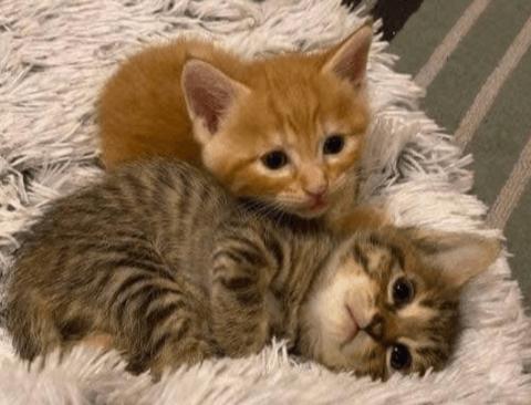 임신한 고양이 냥줍 후기