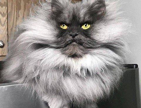 근엄 그 자체인 고양이.jpg