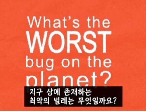 지구상에 존재하는 최악의 벌레.jpg