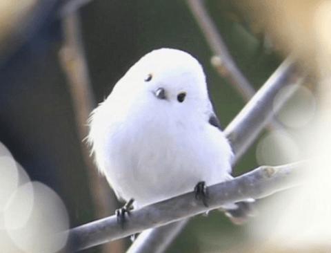 평소엔 존귀인데 화나면 무서운 새