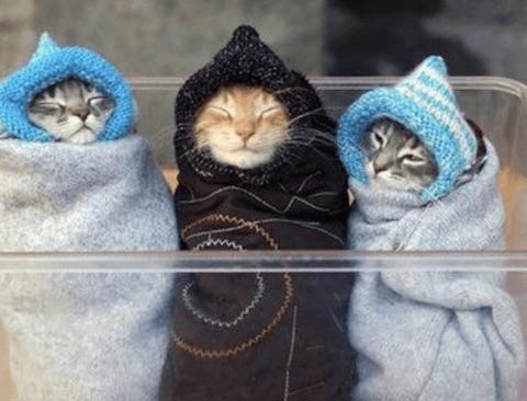 고양이들을 얌전하게 만드는 방법.jpg
