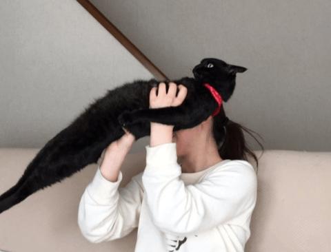 고양이가 맞는지 의심이 드는 고양이.jpg