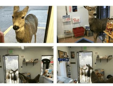 기프트샵에 난입한 사슴가족들.jpg