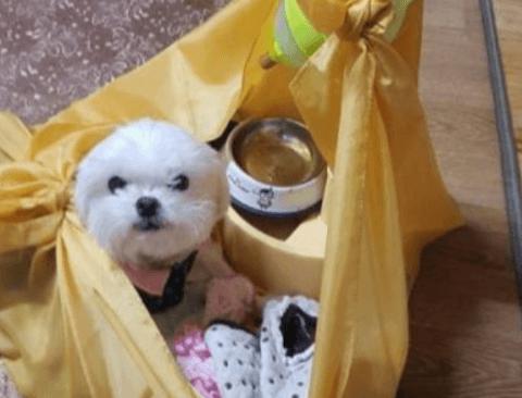 강아지가 보자기에 쌓인 이유