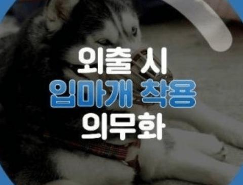 [스압] 개 입마개에 대한 개통령 강형욱의 생각