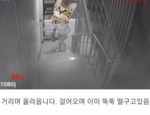 계단에 똥 싸고 도망간 여자.jpg