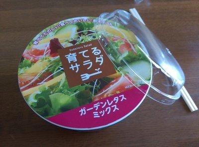 일본 편의점에서 샐러드를 사왔는데 열어보니.. (반전주의)