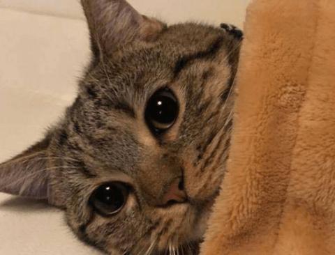 고양이가 극세사 이불을 만나면.jpg