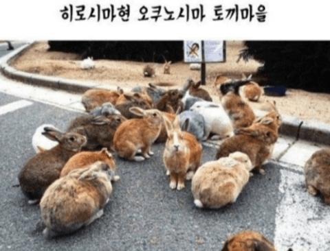 일본에서 유명한 동물마을 4 (스압주의)
