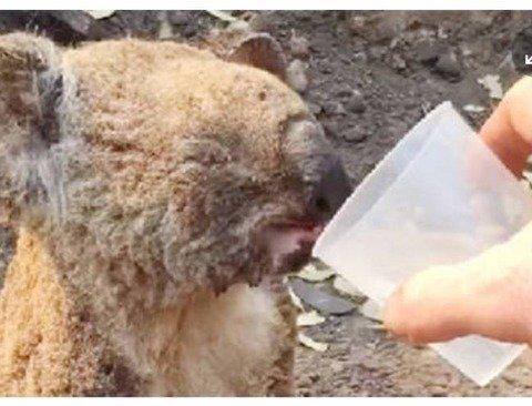 멸종 위기 동물 지정 .jpg