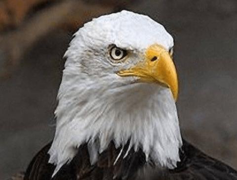 사람들이 잘 모르는 독수리의 진실