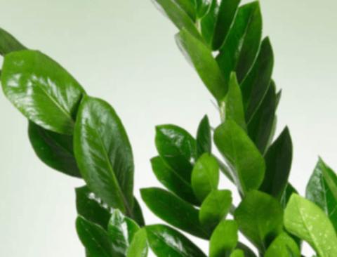 습한 화장실을 맑게 바꿔줄 식물 8가지