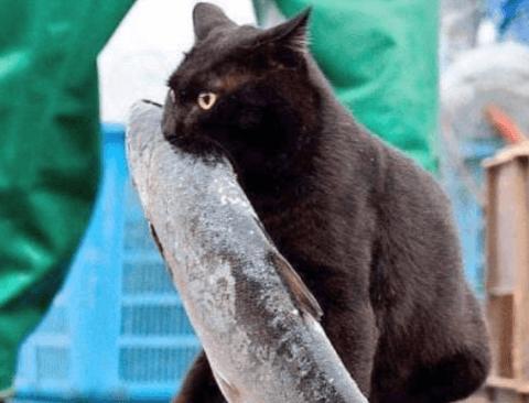 [스압] 탐욕스러운 고양이 사진 모음.twt