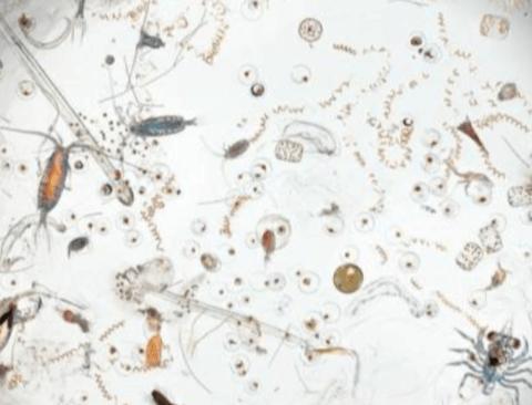 현미경으로 본 바닷물 한방울