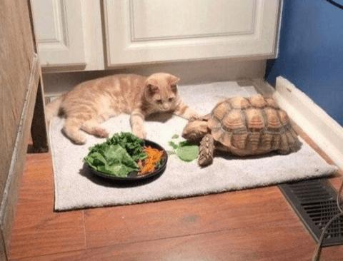 먹방 보다가 잠든 고양이.jpg