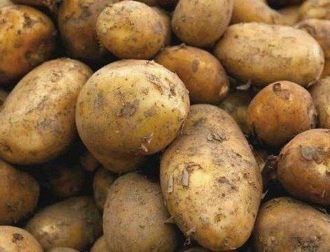 살충제 계란을 대신할 단백질 식품 6가지
