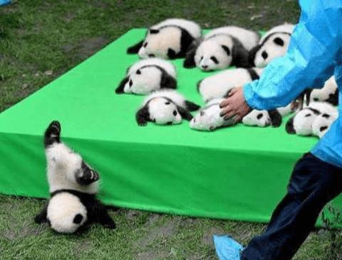 멍충미 돋는 동물 사진들 모음