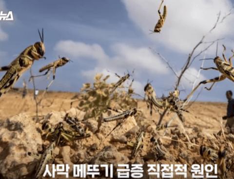 동아프리카에 사막 메뚜기 떼 원인